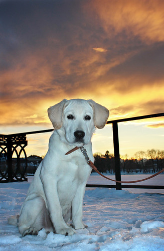 sunset sky dog animal canon ukraine animalplanet ivanofrankivsk