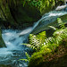 Silberbachtal # 8 - Wasserfall, Klippen und Farn - Waterfall, cliffs and fern