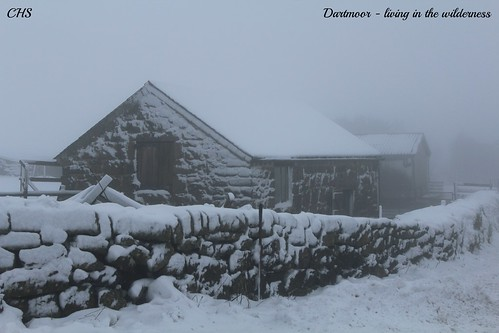 Living in the wilderness   Dartmoor - 23rd January 2013 by Stocker Images