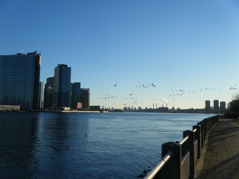 Geese over the East River