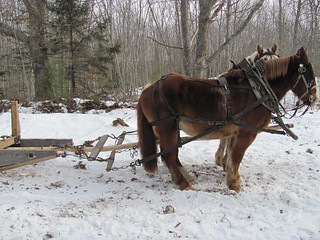 LogSled-horseharness_profile_IMG_1851