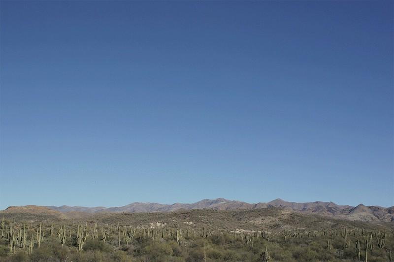 SaguaroCactusPlants2