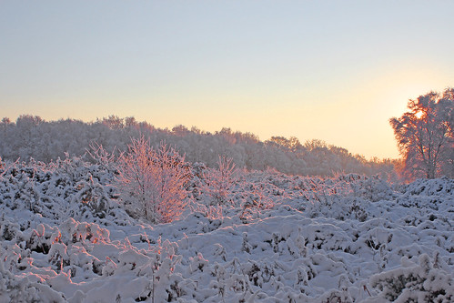 trees winter snow sunrise norfolk heath norwich mousehold