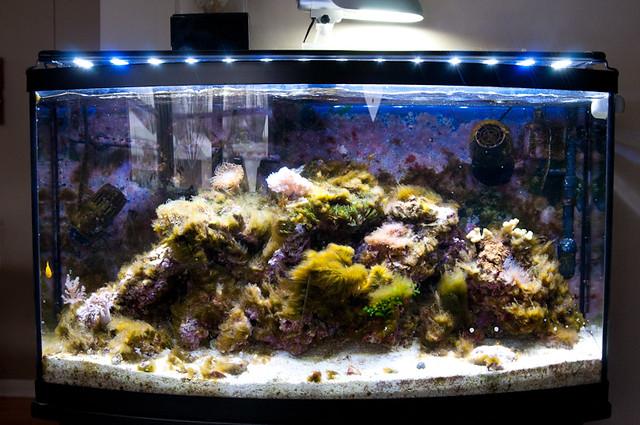 Fish Tank Games Algae Black Algae In My Fish Tank