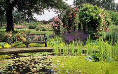 RNRS Rose Gardens - The Gardens of the Rose, Hertfordshire, UK |  View of garden across central pond (10 of 12)