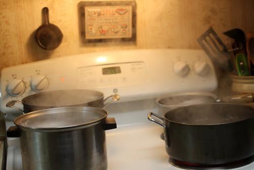 Maple Sap Boil