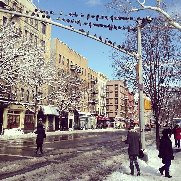 Pigeons roosting on traffic lights after Nemo hit NYC