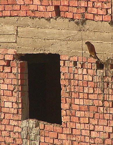 EgyptBird-1