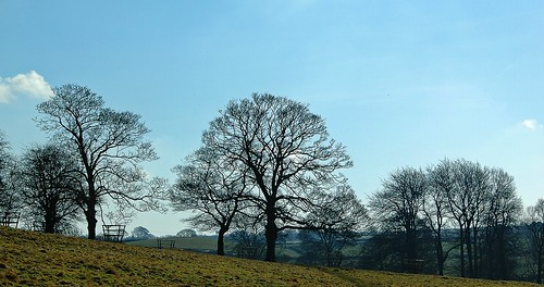 Hardwick Park 4 by birbee