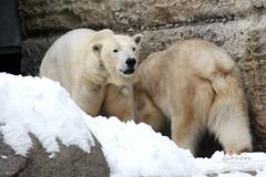 Giovanna&Yoghi&Co Tierpark Hellabrunn