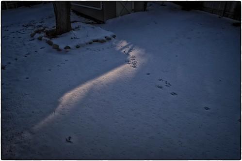 Evening Snow Light, February 23, 2013