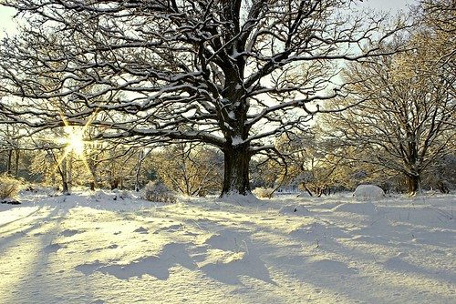 wood trees winter light sunset sky favorite sun white inspiration snow cold color tree slr art nature colors beautiful beauty sunshine weather composition digital forest canon woodland season landscape photography evening frozen photo woods scenery warm flickr frost december afternoon seasons view image sweden snowy scenic picture sunny frosty s best foliage photograph scenary freeze views frame land imagination sverige oakwood dslr oaks oaktree winterland comments 2012 550d timlindstedt