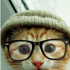#repost #hipster #cat... Cute :-D