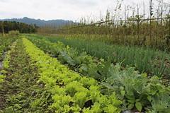 里拔哈農場農民生產的蔬果雜糧已可訂購。