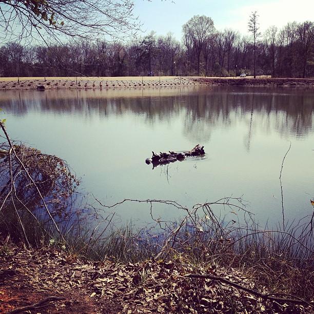 Turtles sunbathing  at Brick Pond Park