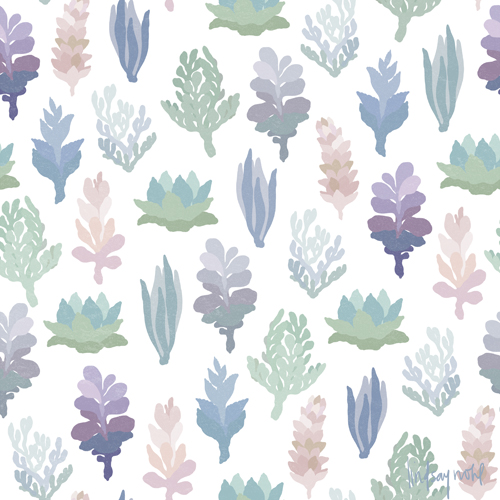 Succulent_LindsayNohl_web_sm
