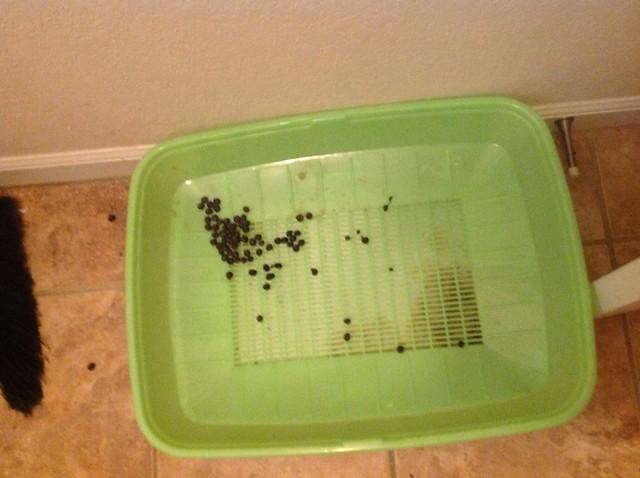 Tidy Cat Breeze Litter System Binkybunny Com House