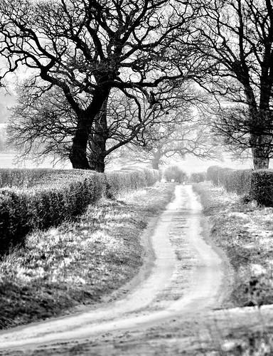 [フリー画像素材] 道路・道, 樹木, 風景 - イギリス, モノクロ ID:201303212000