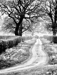 [Free Images] Road / Path, Trees, Landscape - United Kingdom, Black and White ID:201303212000