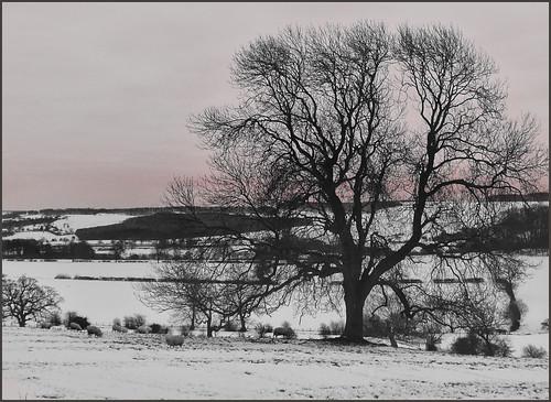 winter tree sunrise morningsheep