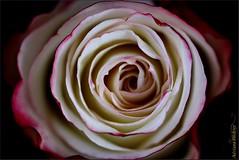 Coleção: Flores, meus amores