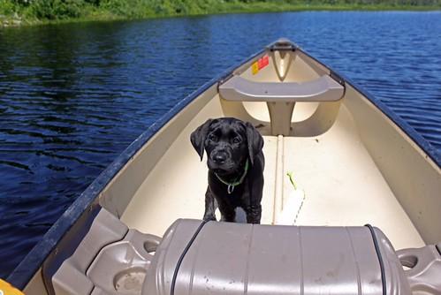 Bailee Boat