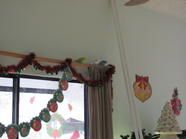 Christmas banner budgies