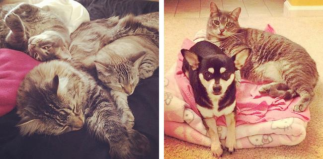 Jessie Pets Cuddling