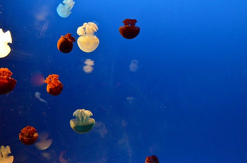 Tiny, Colorful Jellyfish