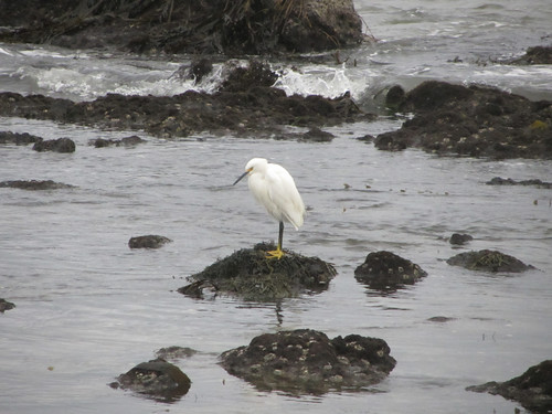 egret in the storm