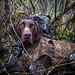 Montego in the Duck Blind by jarred119