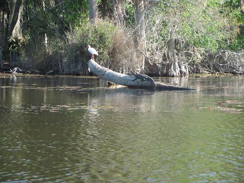 CC Egret and Gator