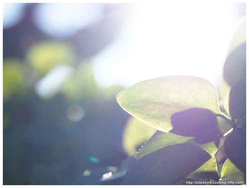 Leaves in the light #01
