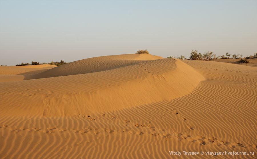 Tar desert