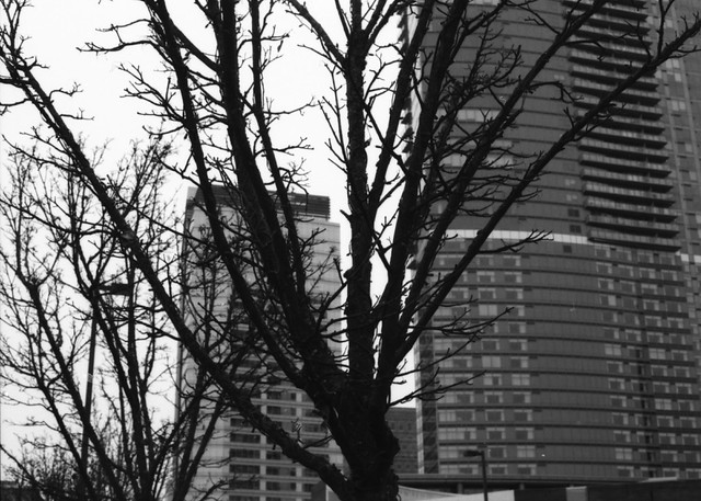 Urban Tree Silhouette