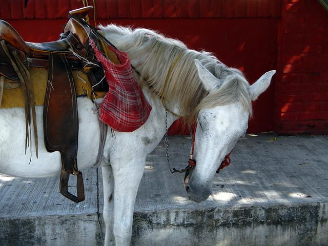 white horse in the hills above Puerto Vallarta