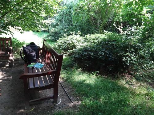 Garten Alma de l'Aigle Brombeeren