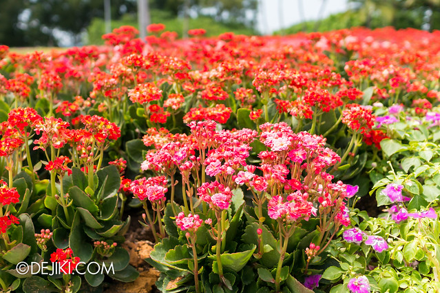 Sentosa Flowers 2013