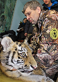 <p>Tracker Kolya Rybin with one of the captured 4-month-old Siberian tigers. (WCS)</p>