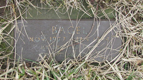 "pet cemetery: ""Bagel"" by William Keckler"