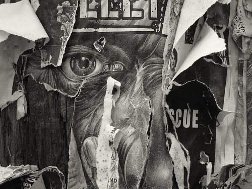 Band Posters on a Telephone Pole, Capitol Hill, Seattle