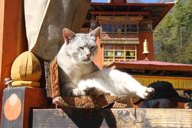 Thimphu, 14/02/2013