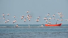 beach(0.0), animal migration(1.0), sea(1.0), flock(1.0), bird migration(1.0), flamingo(1.0), bird(1.0), seabird(1.0),