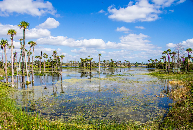 wetlands in Orlando, FL