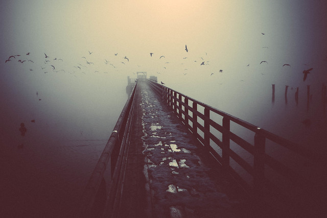 Birds hovering over the jetty.