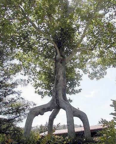 weird_trees08