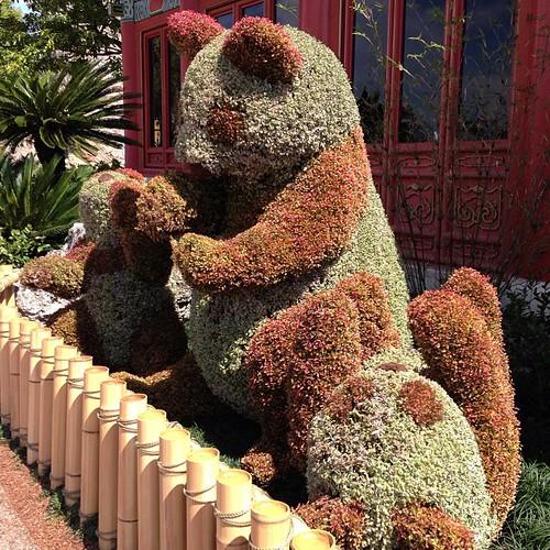パンダのトピアリー。