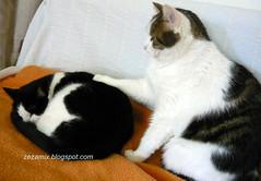 mace - ali mr. macak ne odustaje