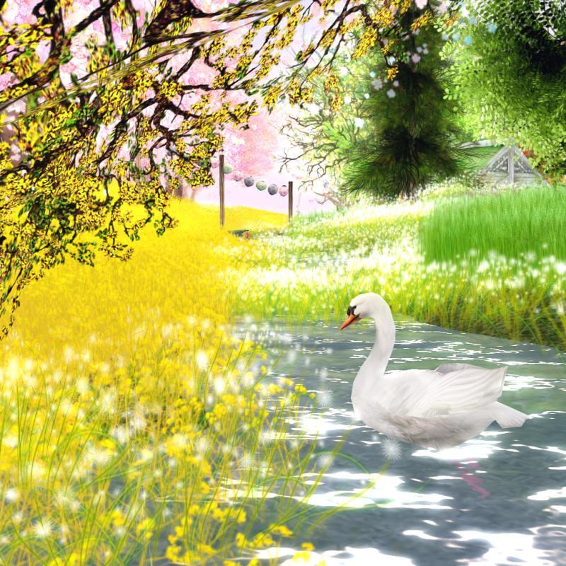 @Cherry Blossom - sunshine