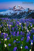 Mount Baker Wildflower Season